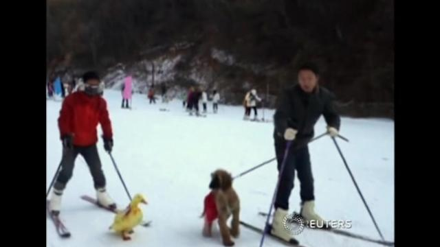Pets and owners race to the finish line at Chinese ski resort