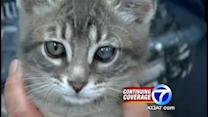 Kitten survives after eyes painted shut