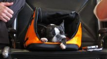 Why it's safer and cheaper not to fly with your pet
