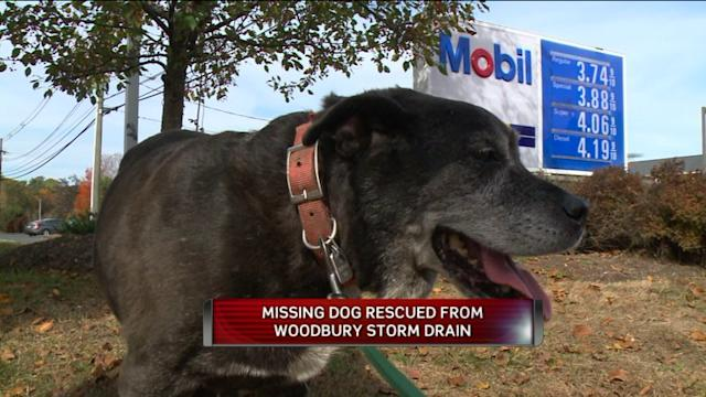 Lost Dog Found Safe In Woodbury Drain