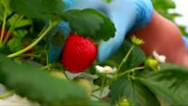 Rift between Russia and Europe over Ukraine spurs Russian agriculture industry