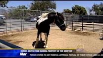Horses seized from Ramona property up for adoption