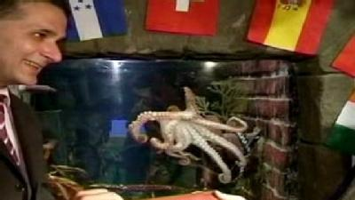 Oracle Octopus Named Honorary Citizen