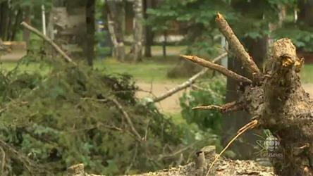 Camper dies when tree falls on tent in Manitoba