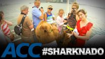 ACC Sharknado Spinoffs