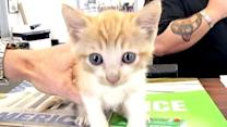 Kitten rescued from inside car's axle