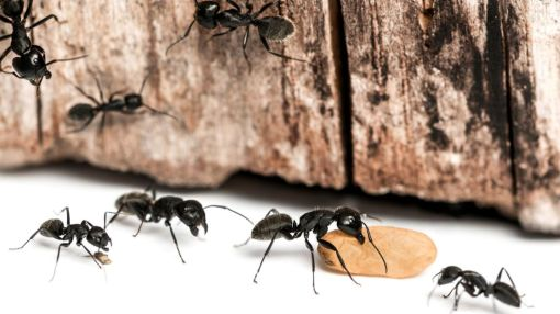 13 Ways to Get Rid of Ants Using Common Items