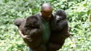 6 Virunga Park Workers Killed Protecting Endangered Gorillas
