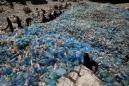 Special Report: Plastic pandemic: COVID-19 trashed the recycling dream