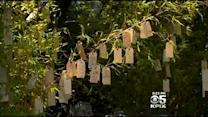 Residents Hang Their Hopes On Wishing 'Tree' In Berkeley