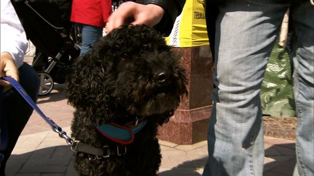 Therapy dogs help victims in distress