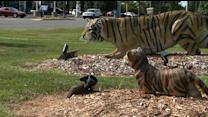Life-Size Tiger Statue Stolen from Man`s Front Yard