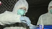 New strain of bird flu easier to catch?