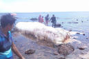 A Mysterious Blob Has Washed Up On A Beach In The Philippines