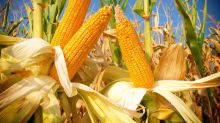 3 Top Agriculture Stocks to Buy in 2017