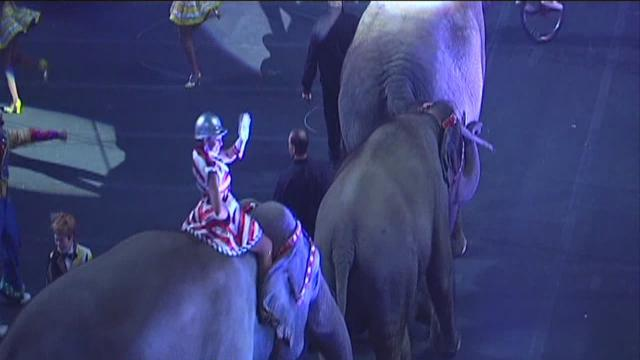 Group Protesting Against The Circus