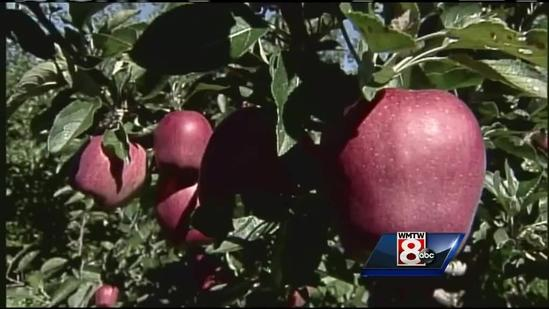 Maine's Fall Foliage Report