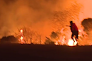 Everyone's sharing this video of a man saving a rabbit from the California wildfires