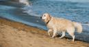 Tar, via libera ai cani in spiaggia: i Comuni non possono vietarlo