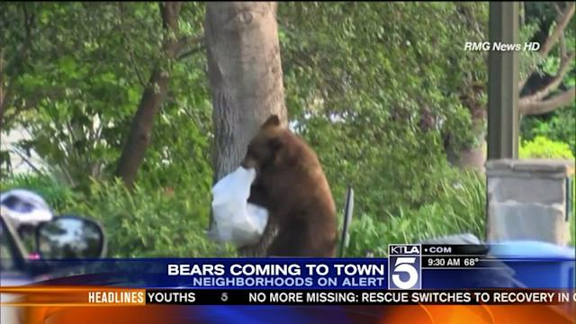 Bears Invade Foothill Neighborhoods in SoCal