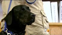 Families Claim 'Angel Service Dogs' Are Untrained