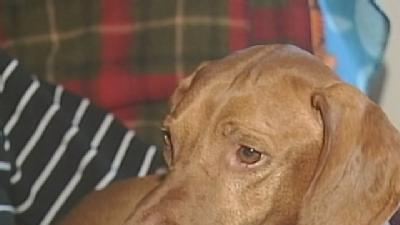 Omaha Dog Could Be Nation's 'Top Dog'