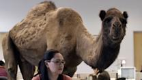 """Hump Day"" commercial creators talk about their wildly successful ad"