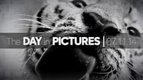 Day in Pictures: 7/11/14