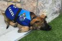 Police dog too friendly for the force gets an adorable new job