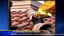 Tiny kitten rescued from roof by firefighters