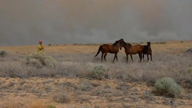 Good Samaritans rescue horses threatened by Powerhouse Fire