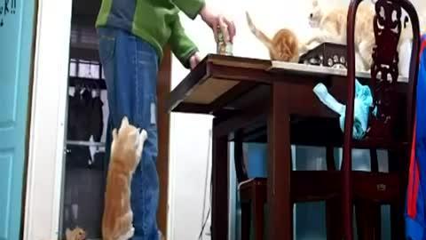 Hungry climbing kittens