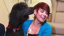 Pet therapy improves health, study finds