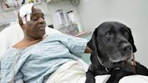 Blind Man, Dog Rescued on NYC Subway Tracks