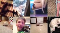The 9 Best Cat Vines Of 2013