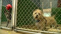 Commission Wants End To Puppy Mills