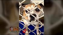 Animal Rights Advocates Pushing For More Changes At Balt. Co. Shelter