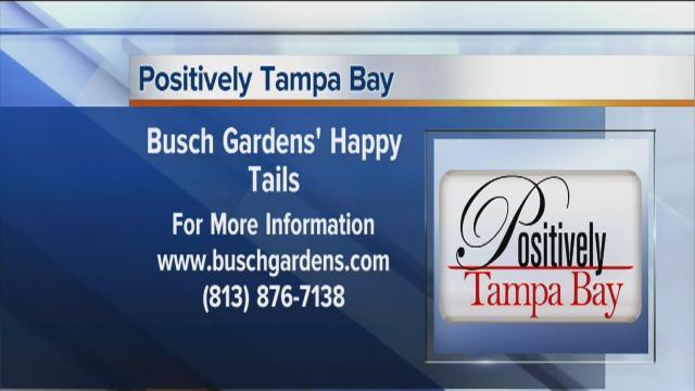 Positively Tampa Bay: Busch Gardens' Happy Tails