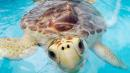 How This Hospital Keeps Sick Turtles Safe During Hurricane Season