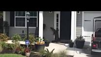 Curious Alligator Tries to Ring Doorbell at South Carolina Home