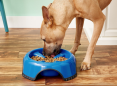 This $6 feeder keeps pups from inhaling their food: 'He actually chews now'