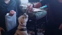 Excited Dog Opens His Own Present