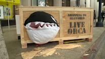 PETA Protests SeaWorld With Ocra Display