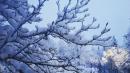 Photos: Heavy snow slams Washington and Oregon, triggering major travel disruptions
