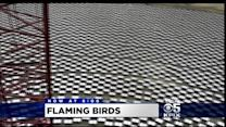 Birds Bursting Into Flames Above Solar Farm Stirs Calls To Slow Expansion