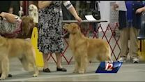 Dog show at the Greensboro Coliseum