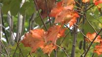 Signs of Fall Show Up Early on the East Coast