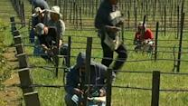 Napa wine growers ready for new season